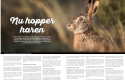 Read the article: Portrait of the hare in the West Coast Magazine